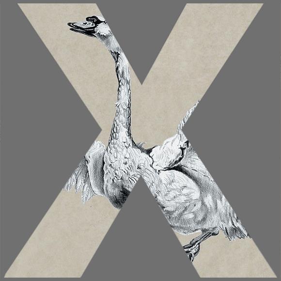 CoverX 3429 is Sufjan Stevens met Seven Swans, album uit 2004